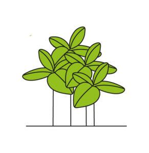 Icona della gestione del basilico