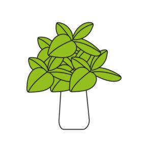 Icona bouquet basilico
